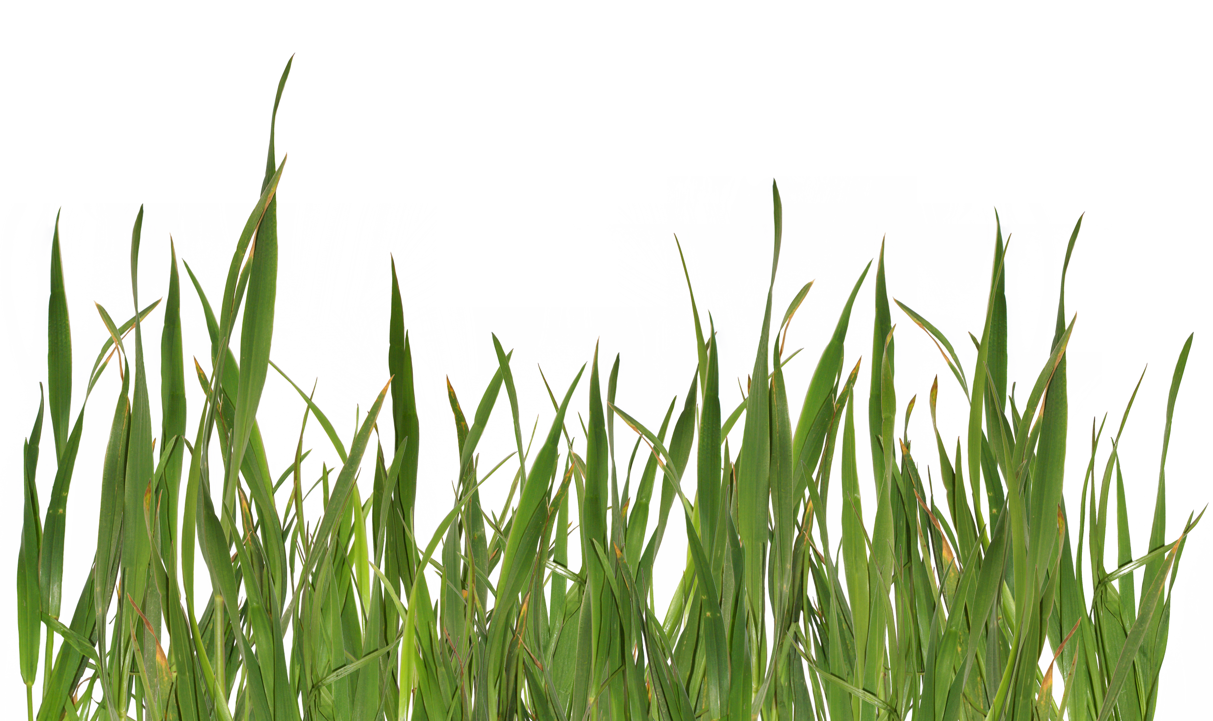 Green twelve isolated stock. Land clipart cloud grass background
