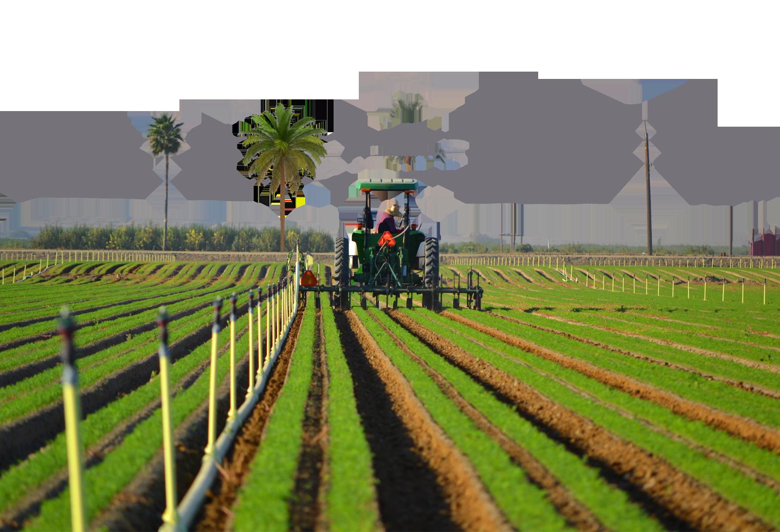 Land clipart crop field. Plants lessons tes teach