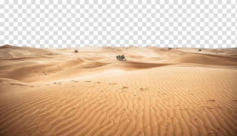 Land clipart desert land. Green leafed plant on
