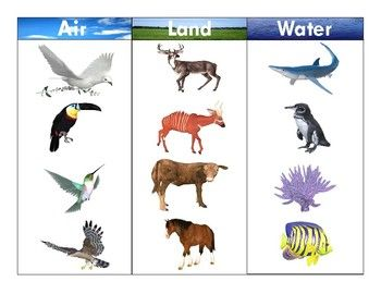 Land clipart land water. Pin on shape worksheets