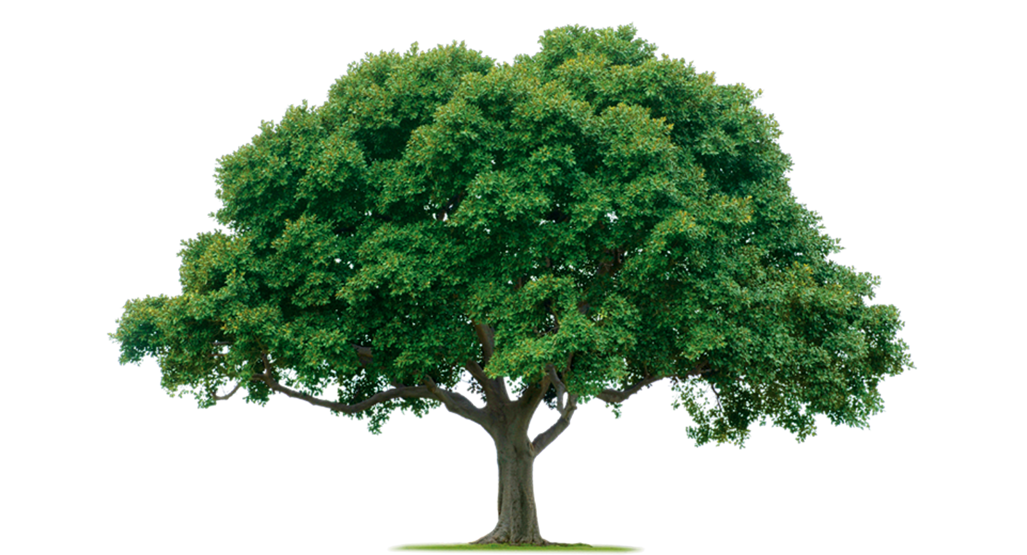 Png images gallery. Free photo tree scenery
