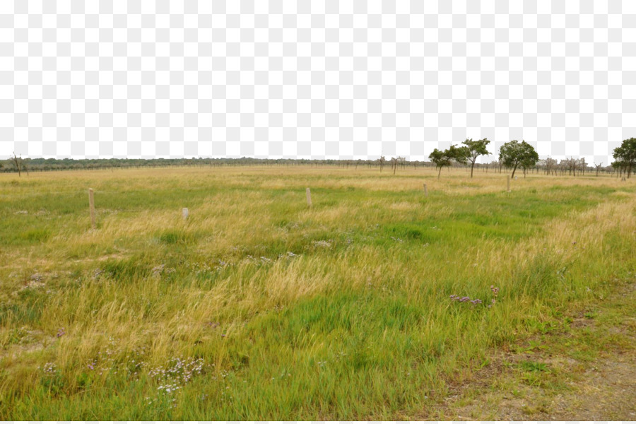 land clipart temperate grassland