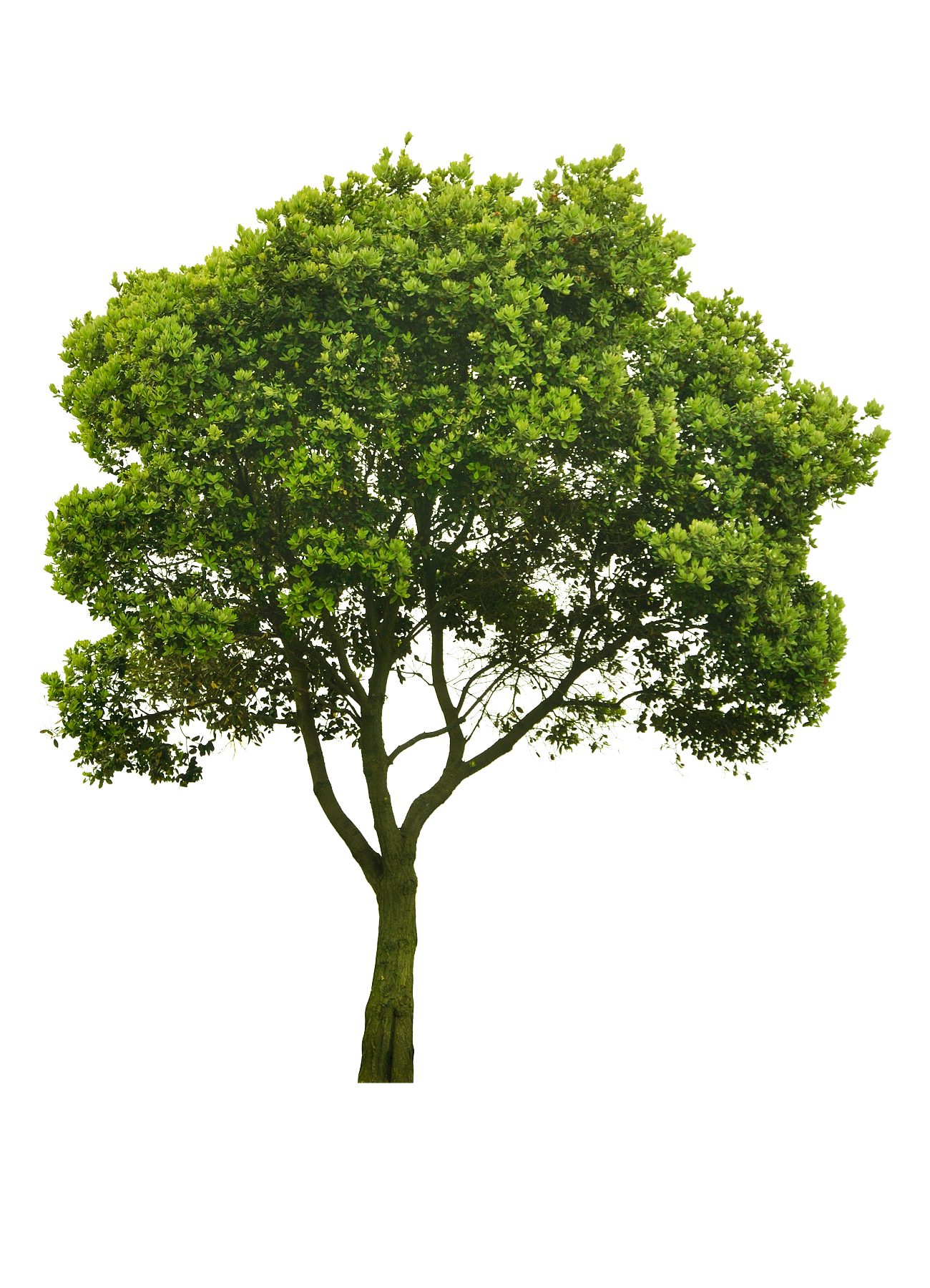 Landscape clipart hedge cutting. Cutout tree png pinterest