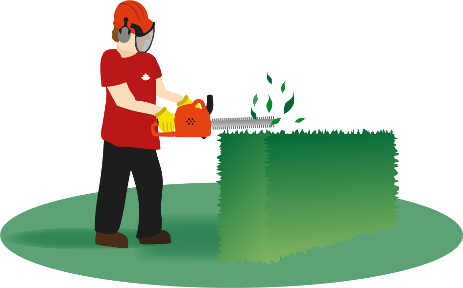 Landscaping frames illustrations hd. Landscape clipart hedge cutting