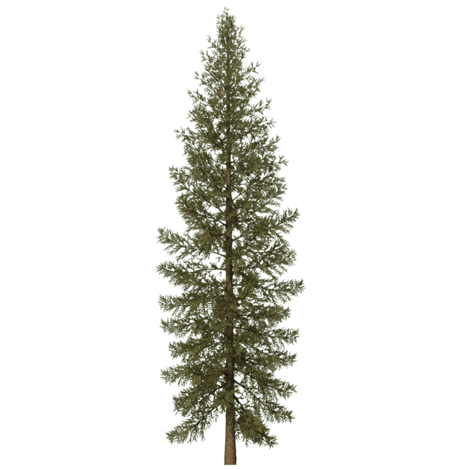 Landscape clipart pine tree. Free on dumielauxepices net