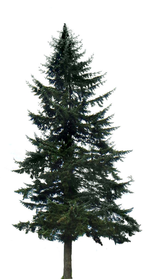 Landscape clipart pine tree. Big other arch pinterest