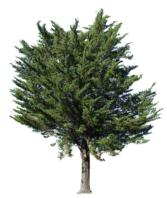 Landscape clipart pine tree. Arboreal http www es