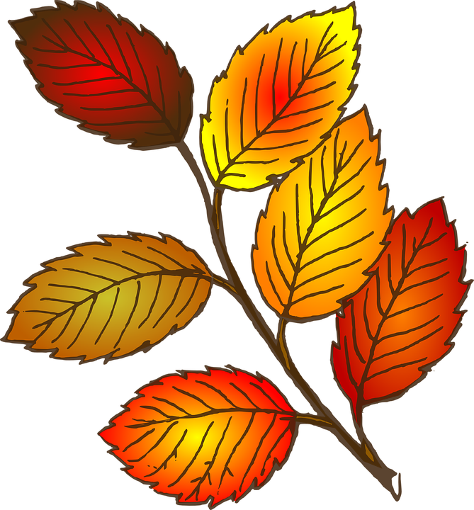 Leaves clipart 5 leave. Falling shop of library