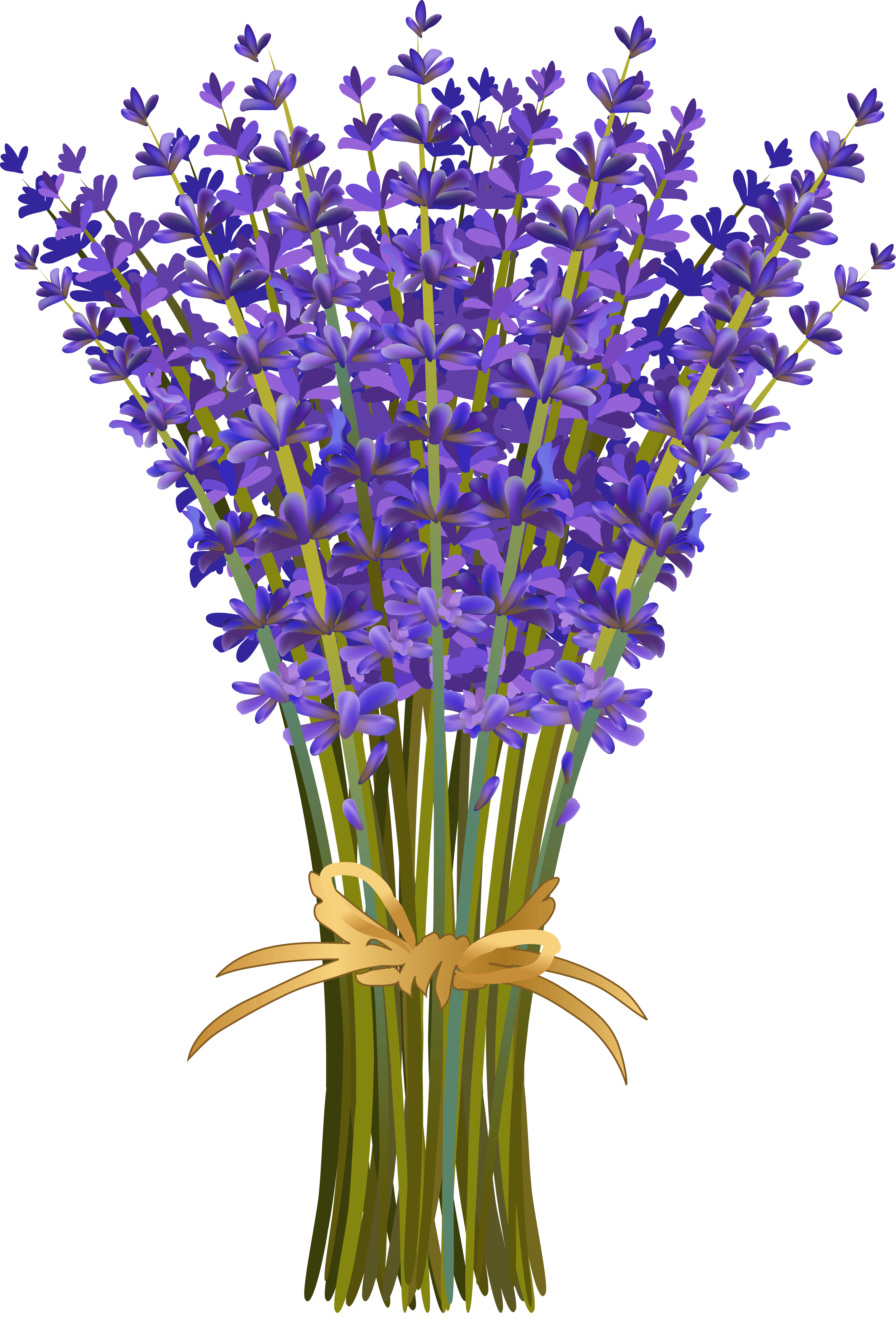 pinterest and decoupage. Lavender clipart lavender field