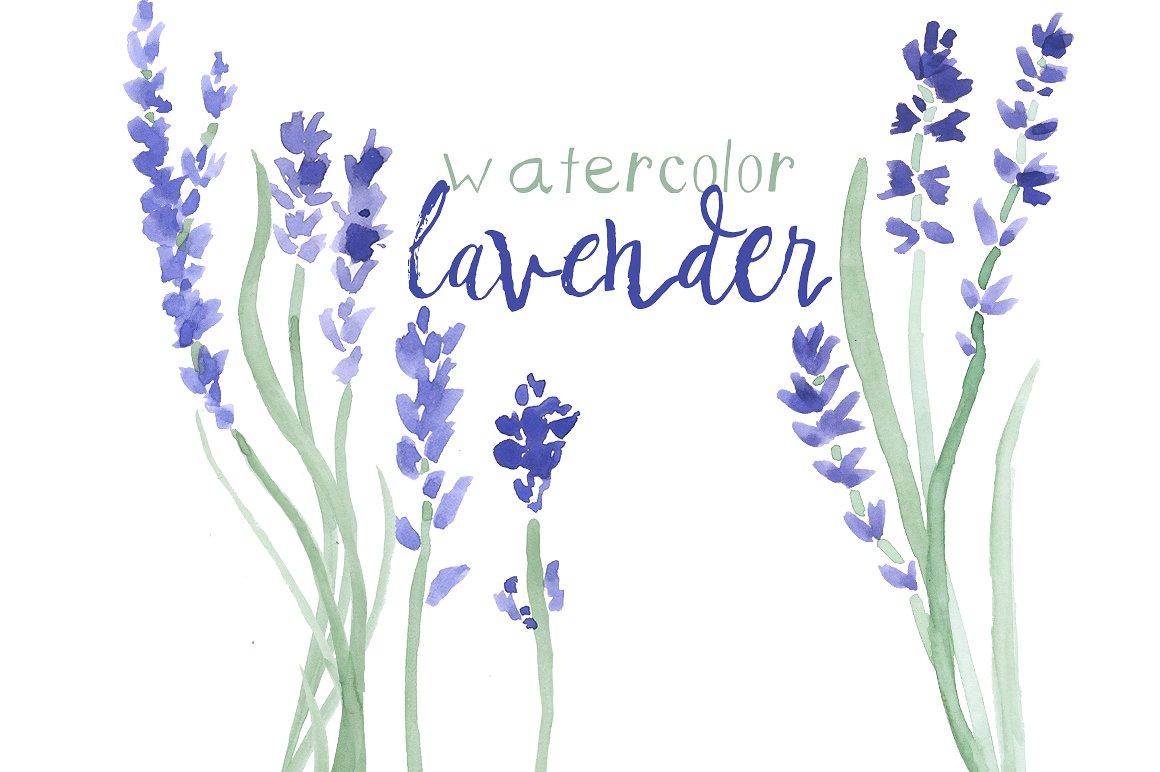Watercolor clip art illustrations. Lavender clipart