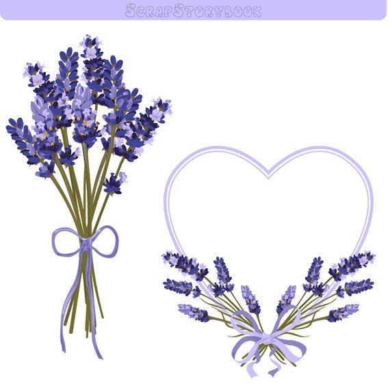 Lavender clipart. Flower frame and dpi