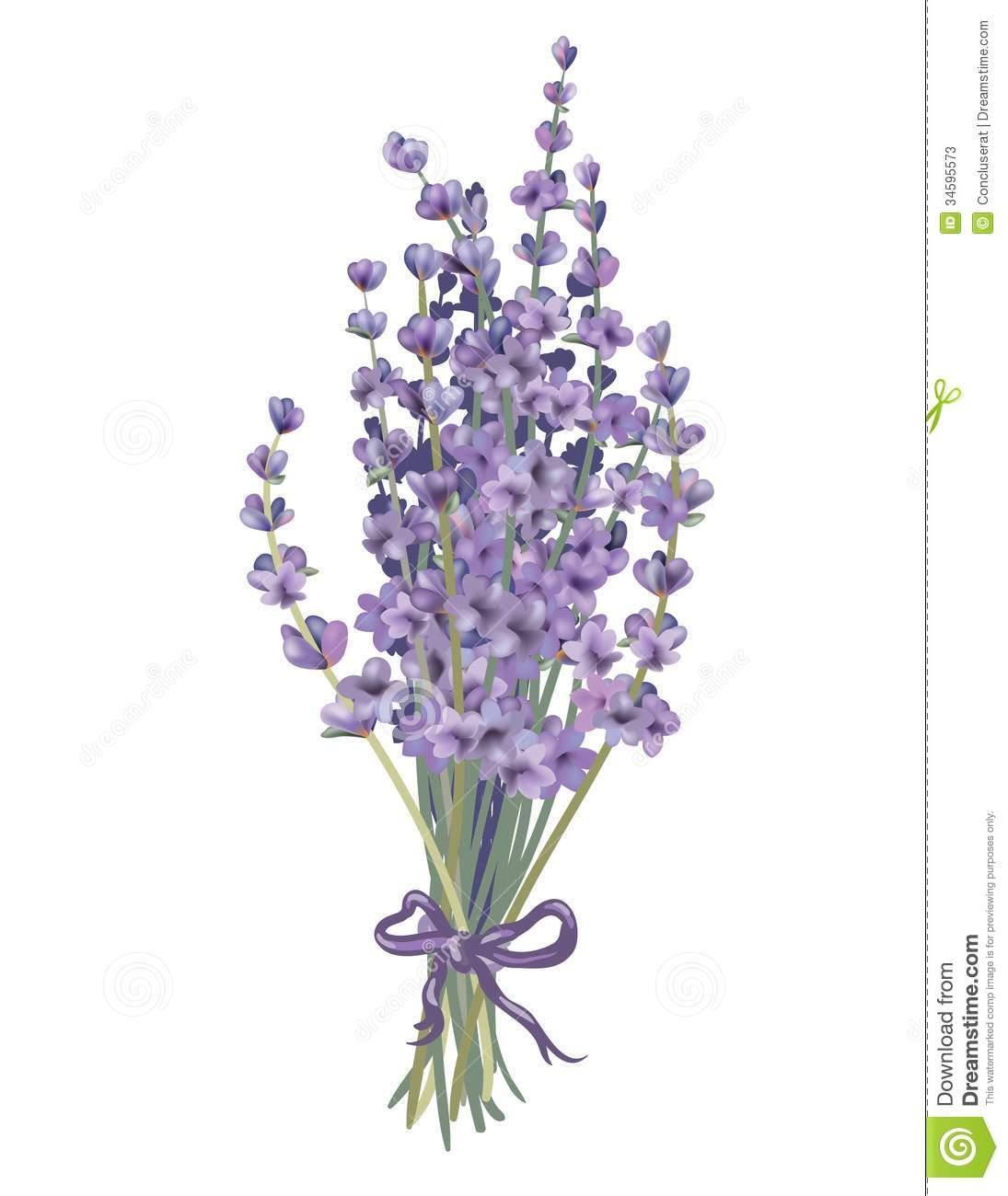 Bouquet . Lavender clipart