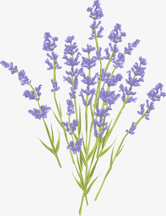 Lavender clipart. Bouquet elegant png image