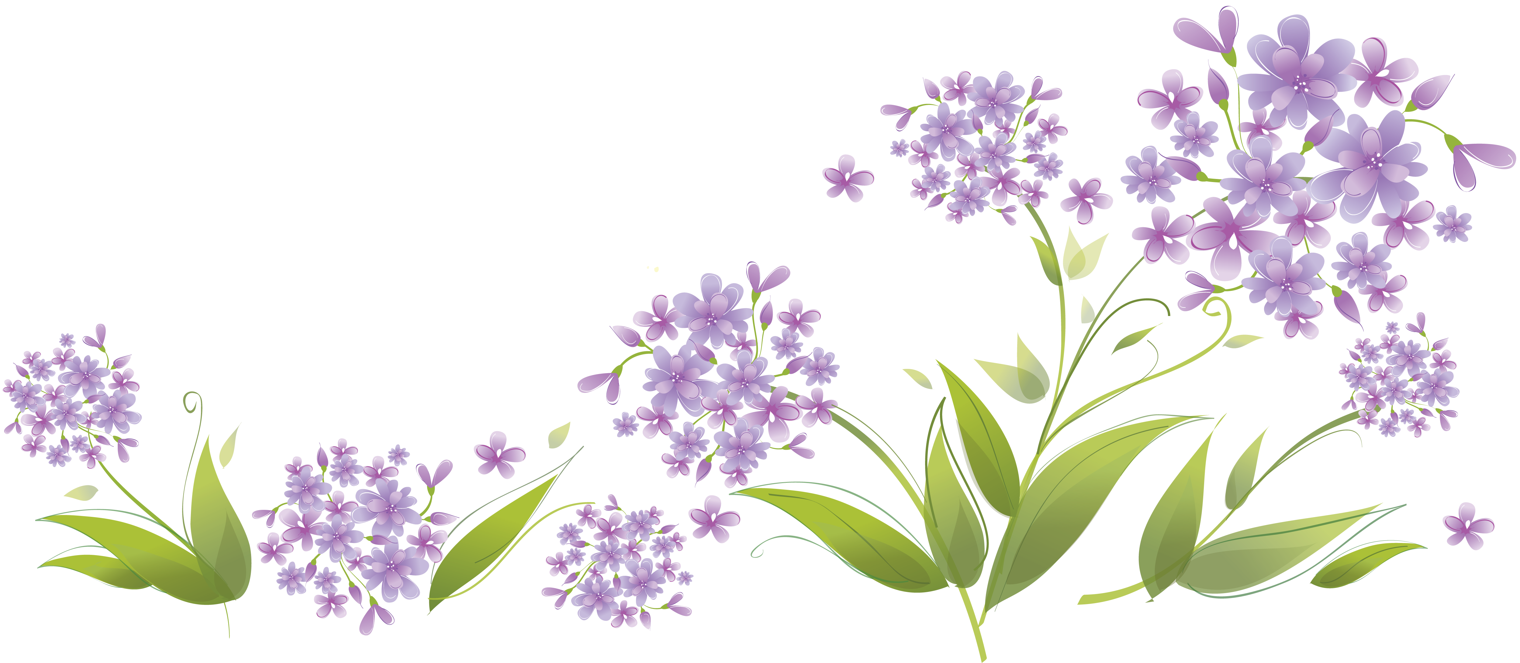 Lavender clipart botanical print. Http www lenagold ru