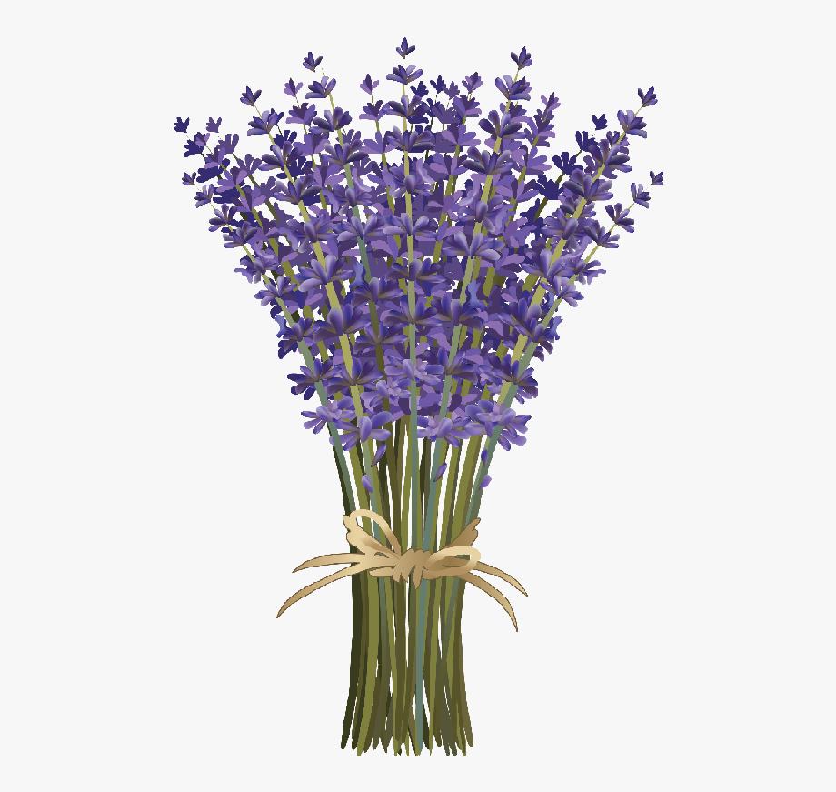Lavender clipart cartoon. Png download flower