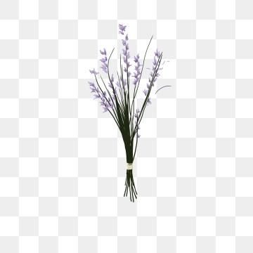 Bouquet png vector psd. Lavender clipart cartoon