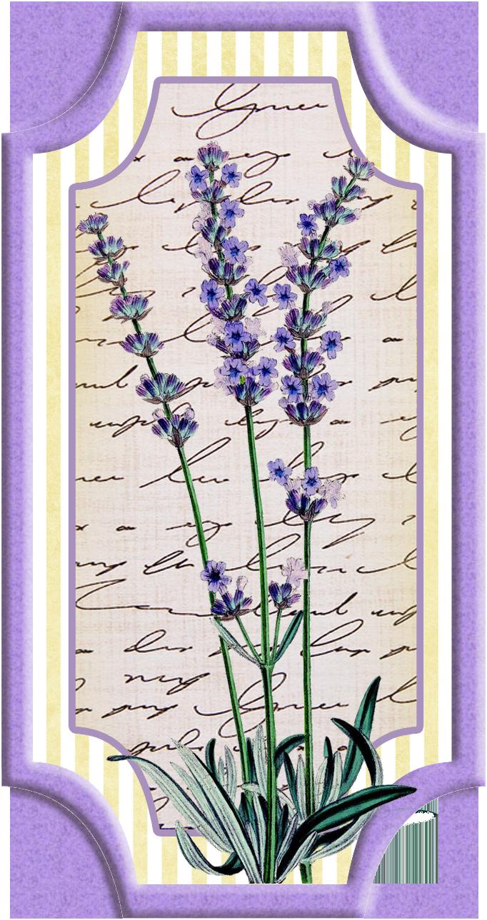Digi stemple by alicecreations. Lavender clipart delphinium