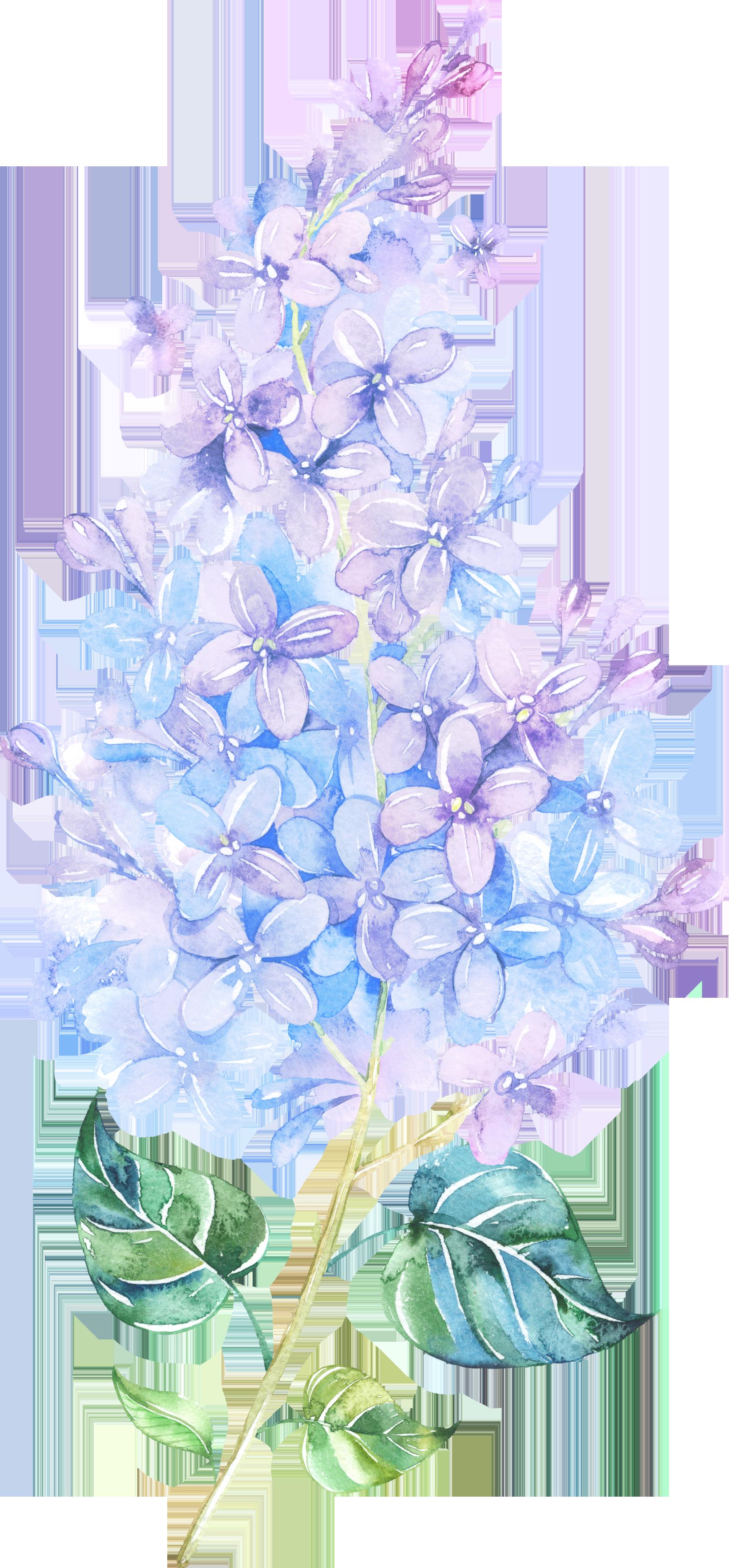 Flower lilac watercolor painting. Lavender clipart delphinium