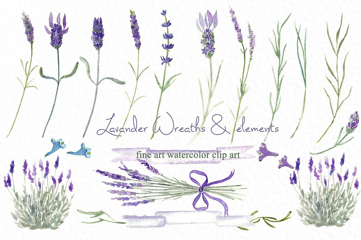 Wreaths watercolor by labfcreations. Lavender clipart lavander