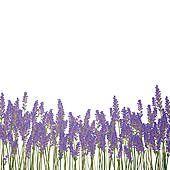 Lavender clipart lavendar.  best clip art