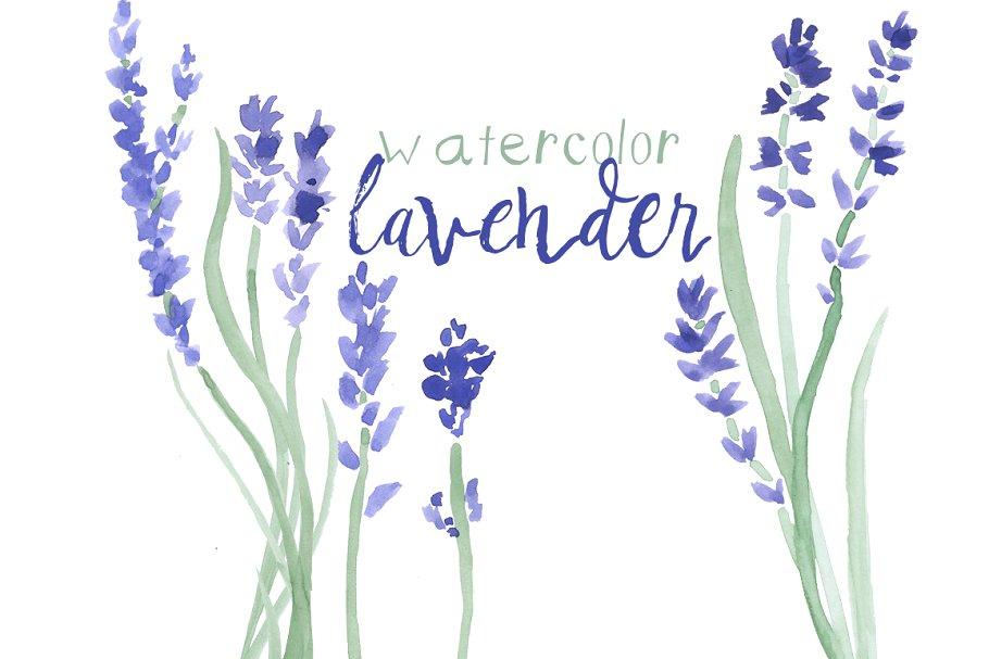Watercolor clip art . Lavender clipart lavendar
