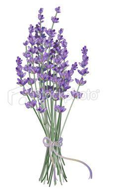 Lavender clipart lavender bouquet. Realistic drawn with gradient