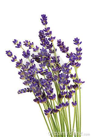 clipartlook. Lavender clipart lavender bouquet