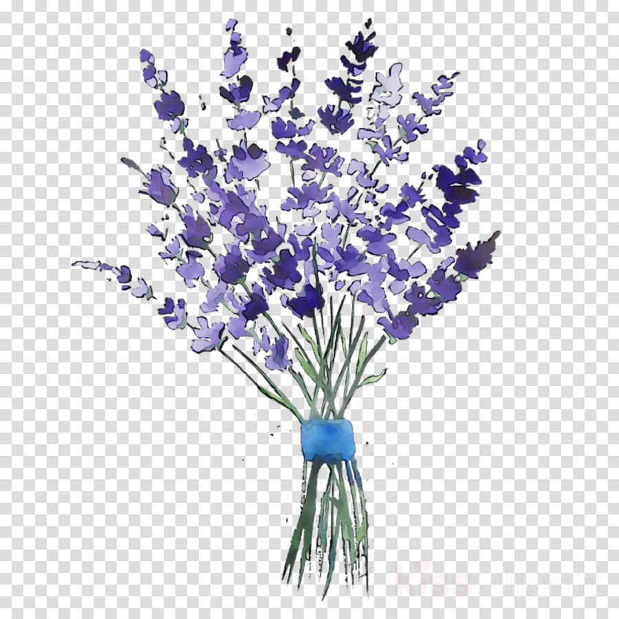 Lavender clipart lavender bouquet. Floral flower background plant