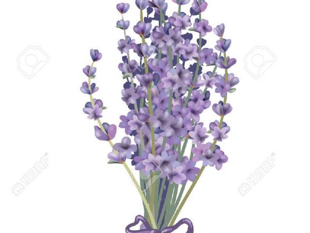 Lavender clipart lavender bunch. Free download clip art