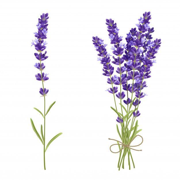 Bouquet realistic illustration free. Lavender clipart lavender bunch