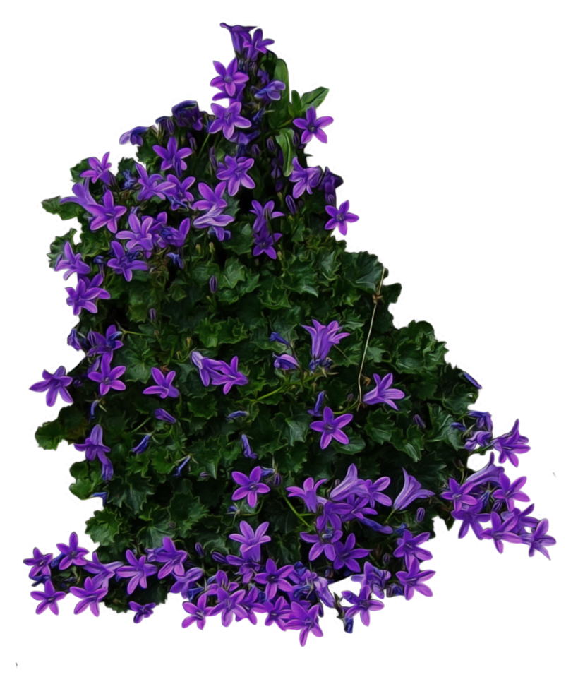 Lavender clipart lavender bush. With purple flowers png
