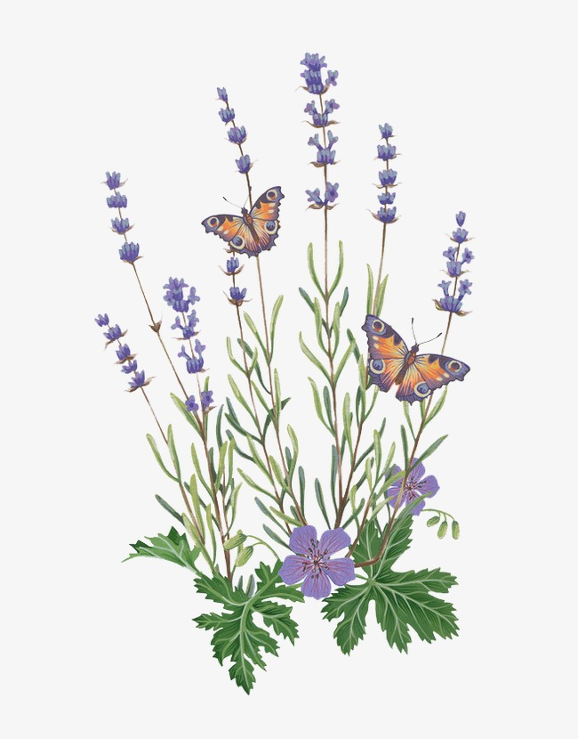 Lavender clipart lavender butterfly. Download english french