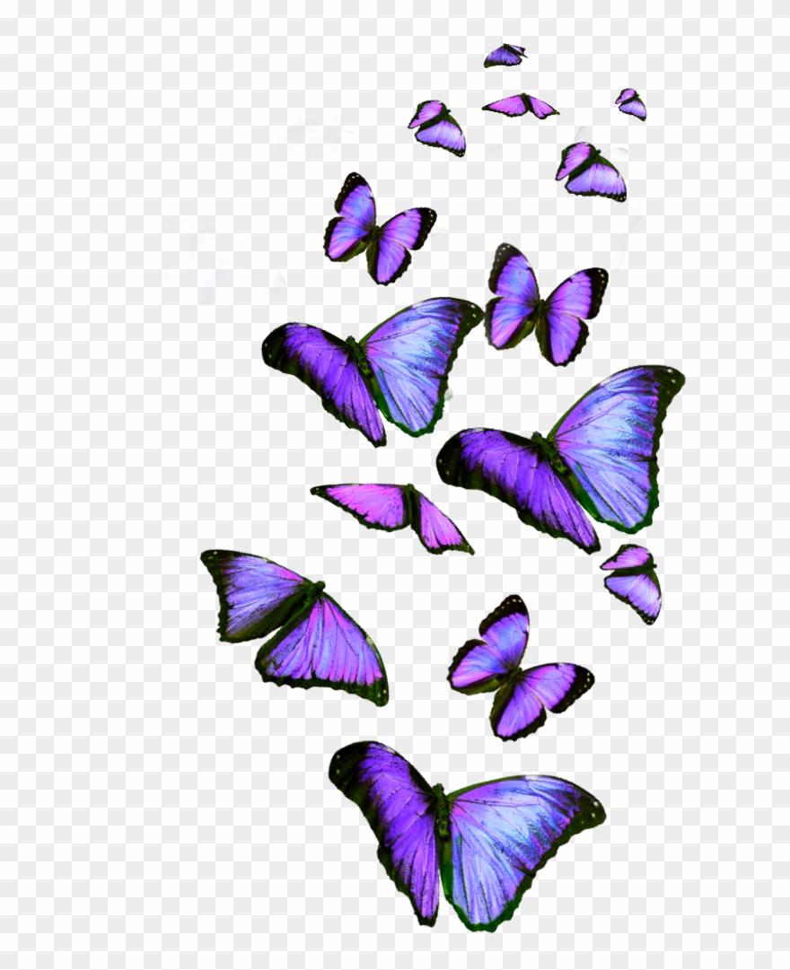 Lavender clipart lavender butterfly. Clip art png download