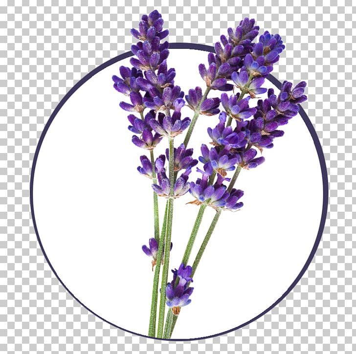 English oil plant png. Lavender clipart lavender french