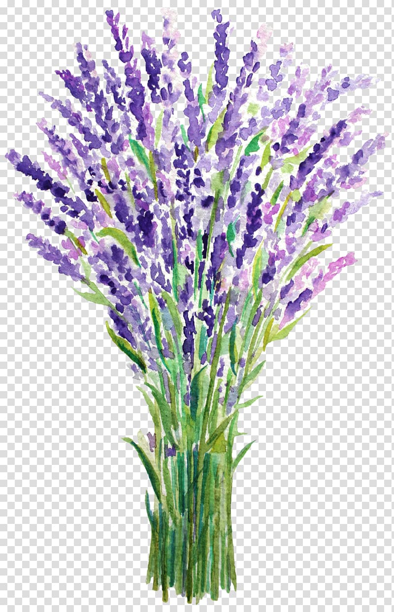 Lavender clipart lavender french. Purple flowers painting english