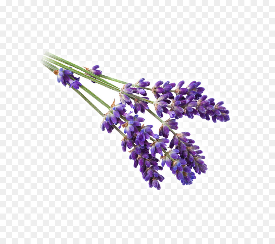 Lavender clipart lavender french. Background purple flower