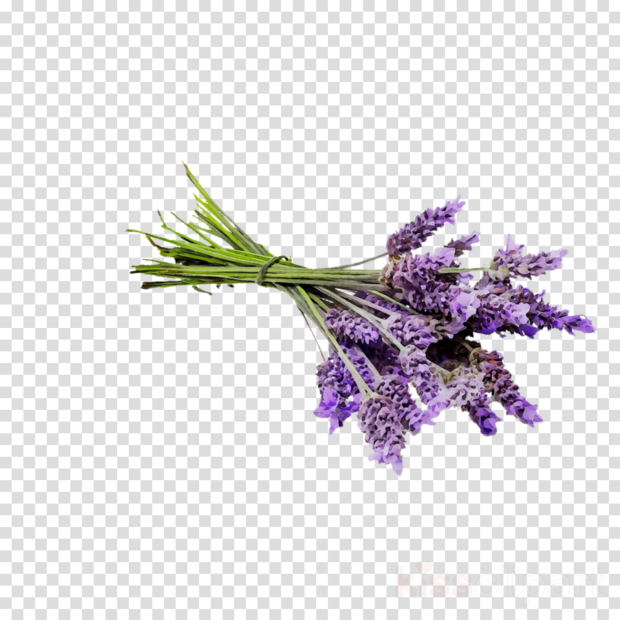 Flowers background perfume . Oil clipart lavender oil