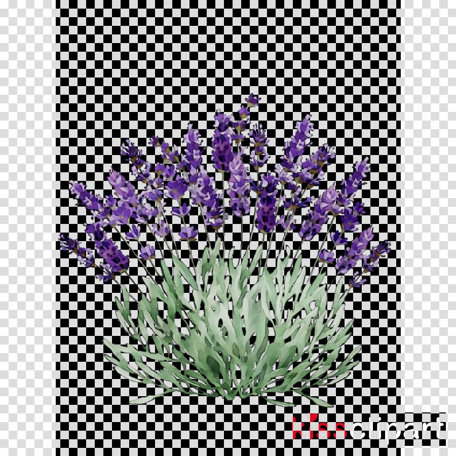 Flower . Lavender clipart lavender plant