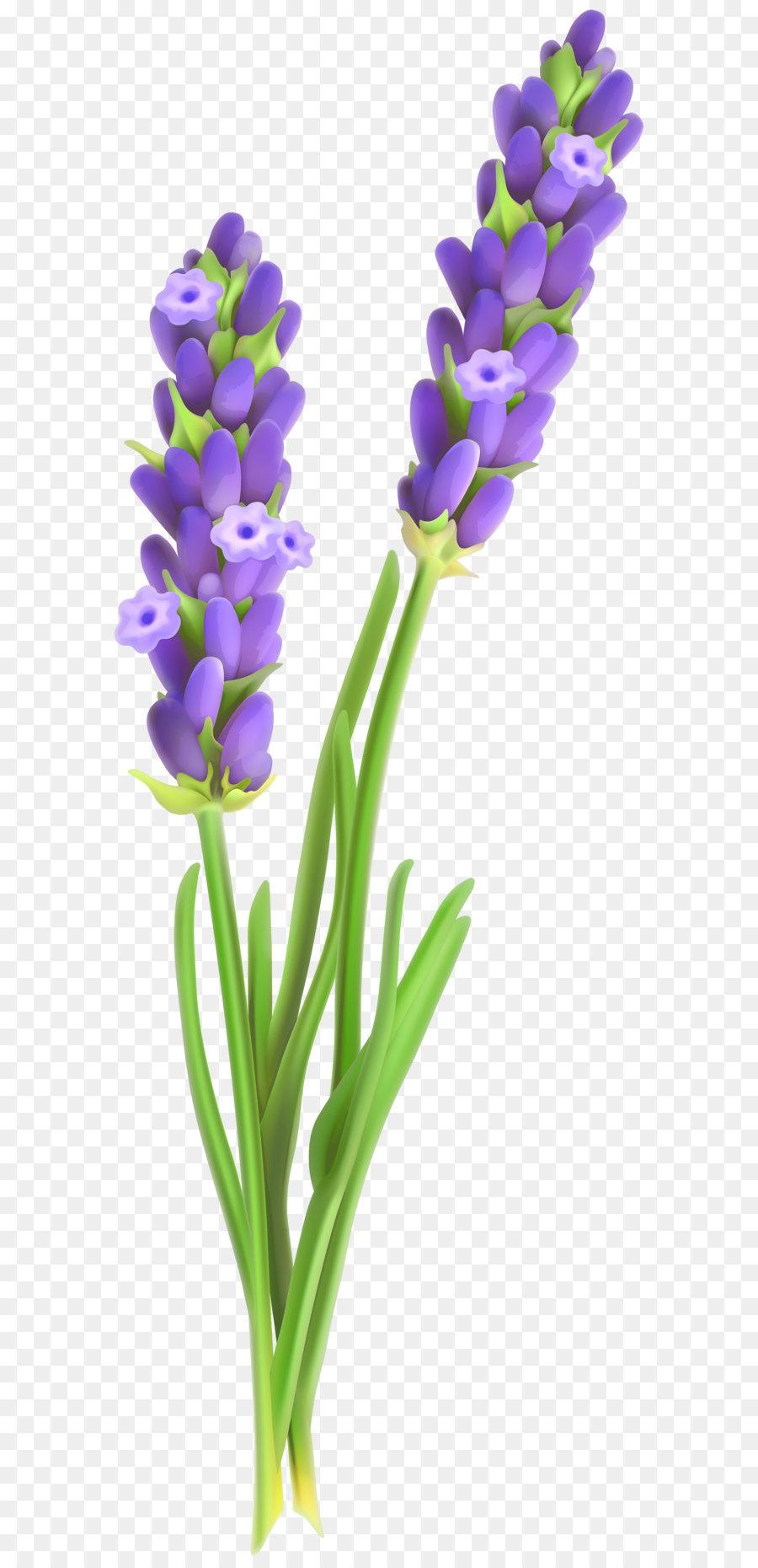 Lavender clipart lavender plant. Flower png download free