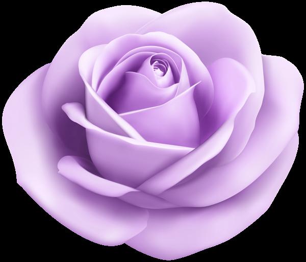 Soft puprle transparent png. Lavender clipart lavender rose