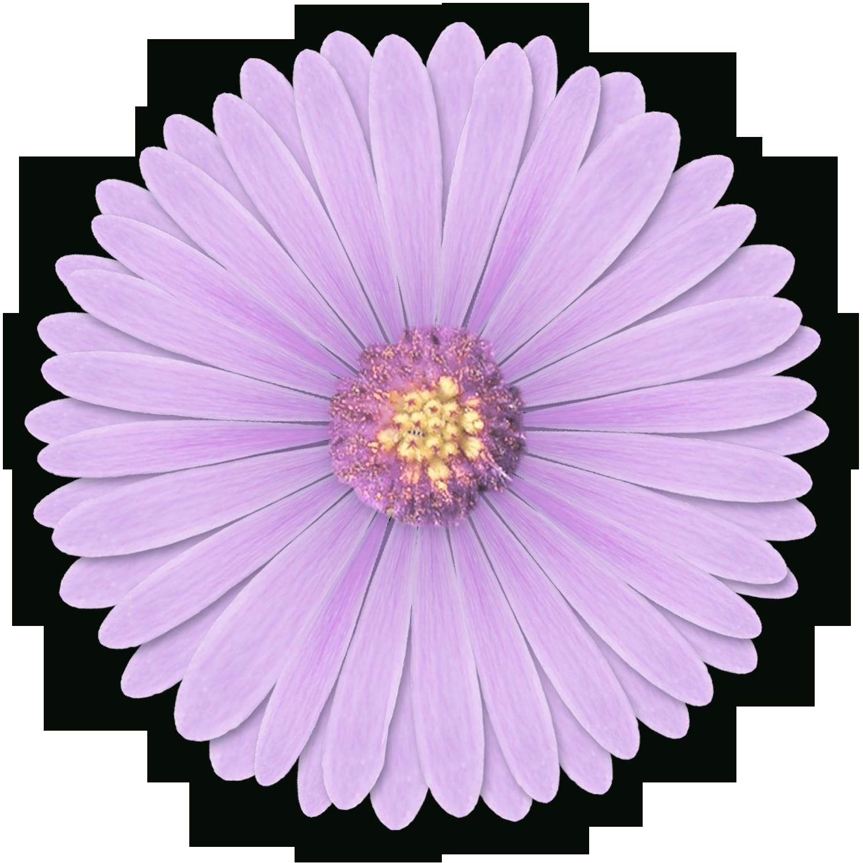 Lavender clipart light purple flower. Transparent png pictures free