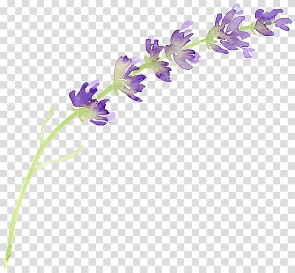 Lavender clipart lilac. Purple flower illustration english