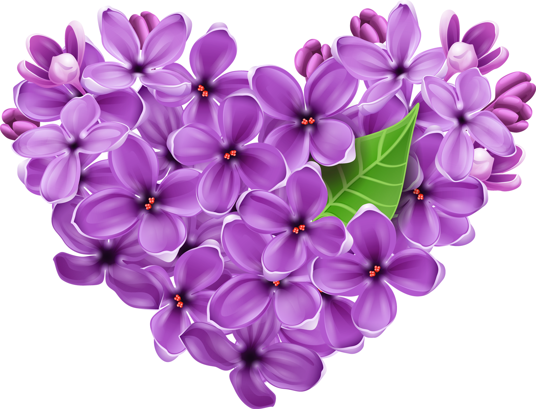 Lavender clipart lilac. Purple heart png picture