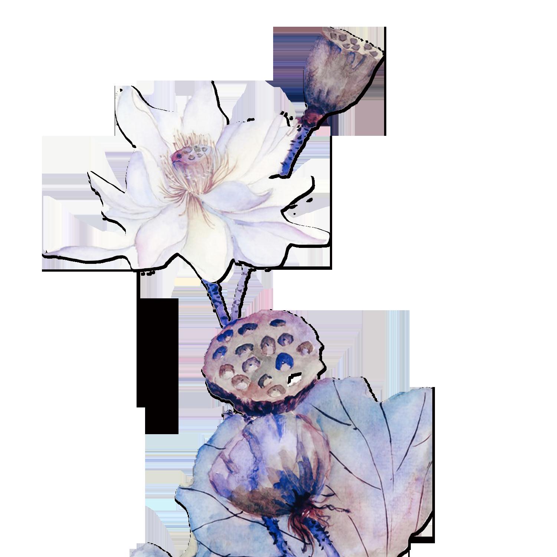 Lavender clipart magnolia. Watercolor painting download lotus