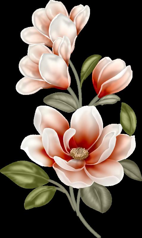Florinda ou flor linda. Lavender clipart magnolia