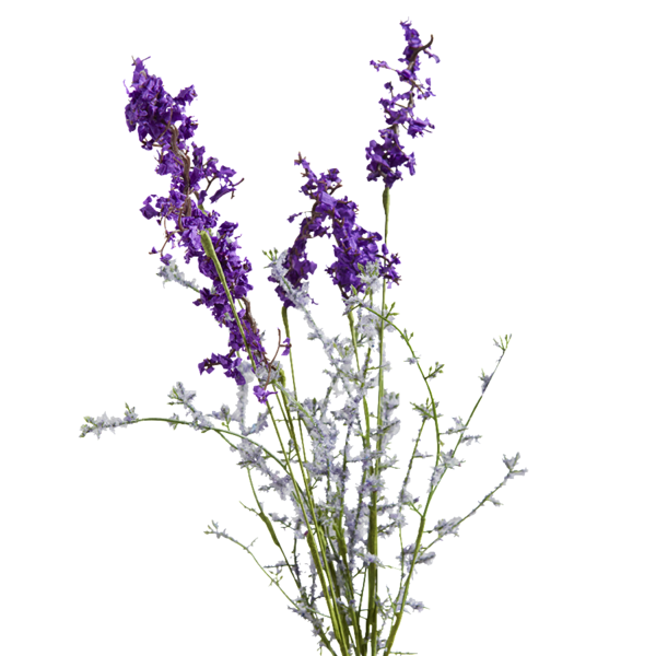 Lavender clipart purple loosestrife.  collection of drawing