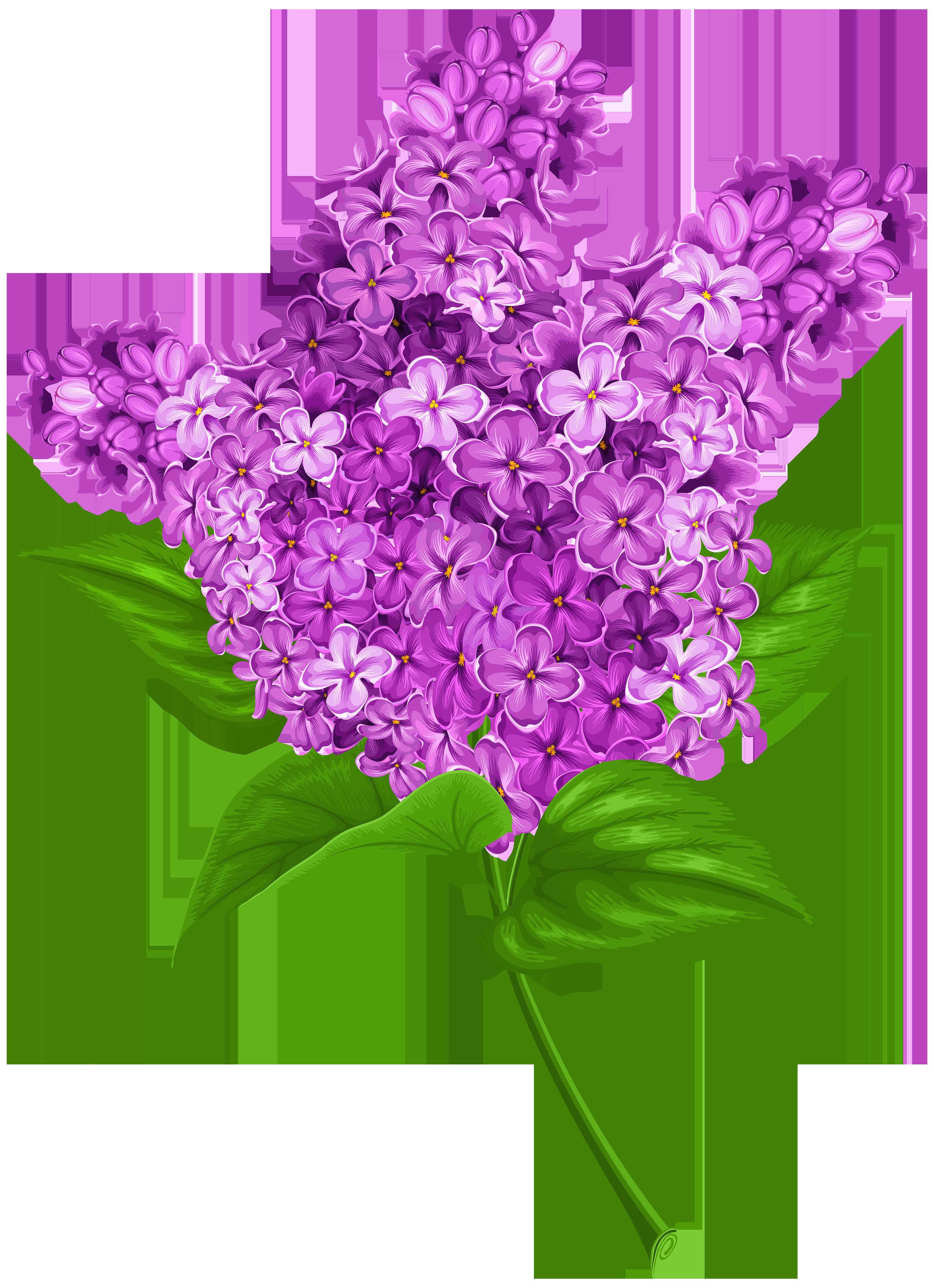 Lavender clipart transparent background. Lilac png clip art