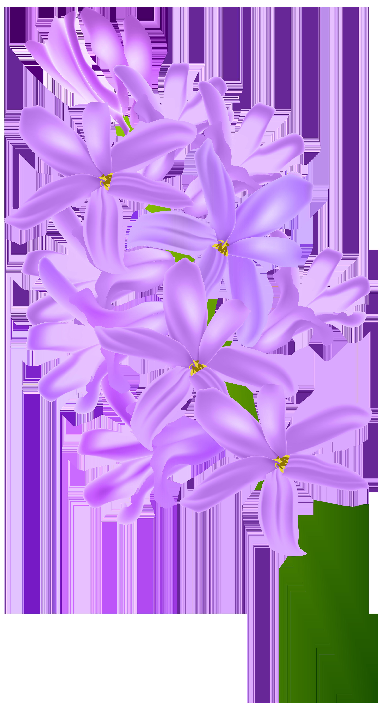 Hyacinth clip art png. Lavender clipart transparent background
