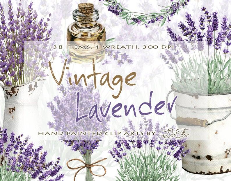 Watercolor lavandula clip art. Lavender clipart vintage