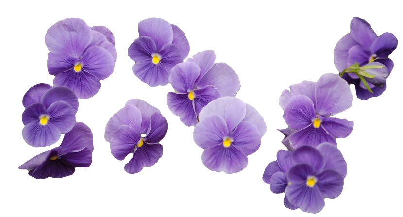 images about on. Lavender flower png